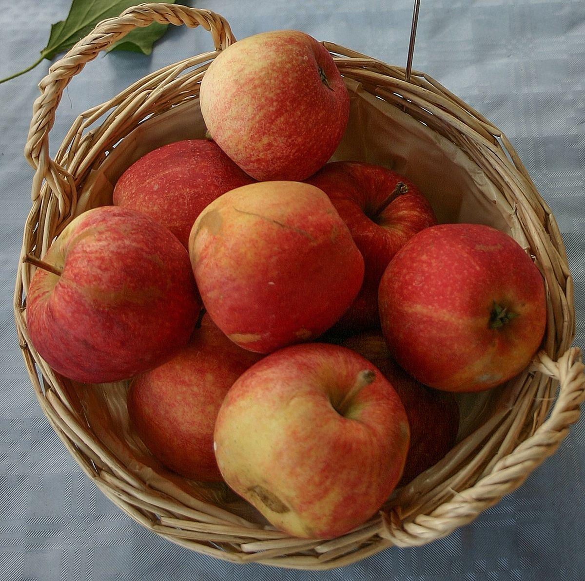 سیب در دوران بارداری